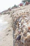 Пляж лета похожий на раковину Стоковое Изображение RF