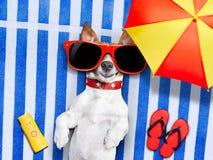 Пляж лета собаки Стоковая Фотография RF