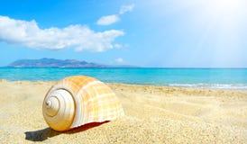 Пляж лета с раковиной Крит стоковая фотография rf