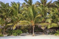 Пляж Занзибара Стоковые Изображения
