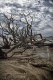 Пляж залива ботаники Стоковые Изображения RF