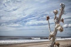 Пляж залива ботаники Стоковое Изображение RF