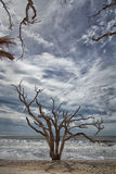 Пляж залива ботаники Стоковые Фотографии RF
