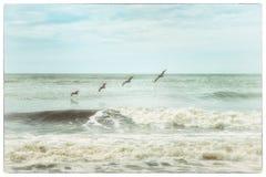 Пляж залива ботаники Стоковое фото RF