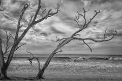 Пляж залива ботаники Стоковые Изображения