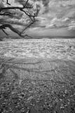 Пляж залива ботаники Стоковое Фото