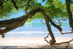 Пляж и дерево Стоковые Изображения RF