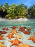 Пляж и морские звёзды подводные Стоковая Фотография RF