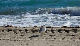 Пляж и птица Стоковые Фотографии RF