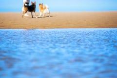 Пляж и собаки моря стоковая фотография
