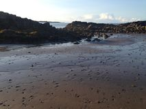 Пляж и sandworms Стоковое Фото
