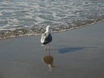 Пляж и seasight на Wijk aan Zee Стоковая Фотография