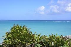 Пляж карибского моря под голубым небом в Tulum, полуострове Юкатан, Мексике, зеленом переднем плане тропического завода, космосе  Стоковые Изображения RF