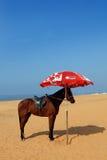Пляж Кералы стоковое изображение