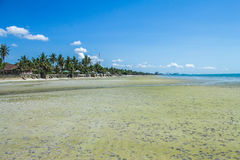 пляж красивейший Стоковая Фотография