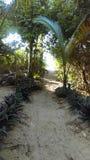 пляж к путю Стоковое фото RF