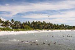 Пляж Мексиканского залива в Неаполь Стоковая Фотография RF