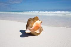 Пляж Мексика Tulum карибский Стоковое Изображение