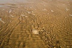 Пляж морских звёзд Стоковая Фотография