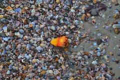Пляж моря песка раковины стоковое изображение rf