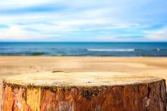 Пляж моря предпосылки пня сосны Стоковая Фотография RF