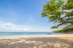 Пляж моря & тень дерева стоковые фотографии rf