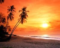 Пляж на заходе солнца, Тобаго Grafton. стоковое фото