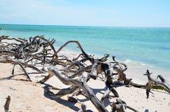 Пляж на Cayo JutÃas Стоковая Фотография RF