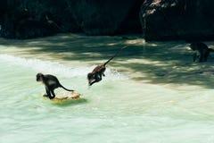 Пляж обезьяны Стоковые Изображения