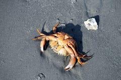 Пляж от Borkum Стоковое Изображение RF