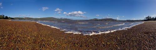 Пляж долины Tamar Стоковое Фото