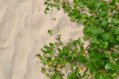 Пляж песка текстуры Стоковое Изображение