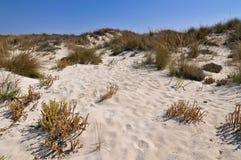 Пляж песка Стоковое Изображение