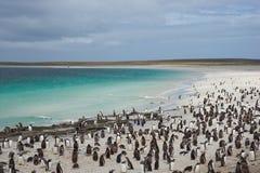 Пляж пингвина Стоковые Фото