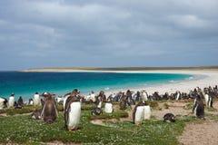 Пляж пингвина Стоковое Изображение RF