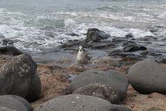 Пляж природы моря Стоковые Фото