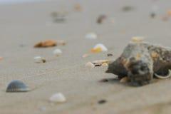 Пляж раковины и пульповидного моря волн белый, Стоковые Фото