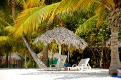 Пляж рая с ладонями и sunbeds Стоковые Изображения RF