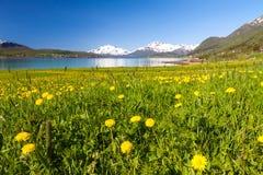 Пляж рая Lofoten Стоковая Фотография RF