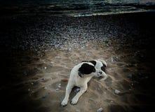 Пляж собаки Стоковое Изображение RF