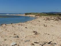 Пляж сталей, Scamander, Тасмания стоковая фотография rf
