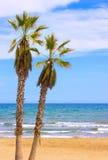 Пляж с ладонями стоковое фото