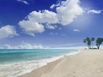 Пляж с ладонями Стоковая Фотография RF