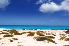 Пляж с белым песком Лансароте Orzola в Canaries Стоковое фото RF