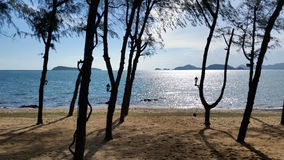 Пляж с соснами в солнечном дне Стоковая Фотография RF
