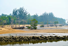 Пляж с сосной Стоковое Изображение RF