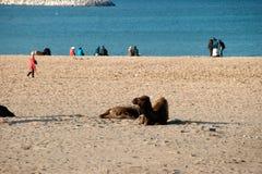 Пляж Танжера Стоковые Изображения RF