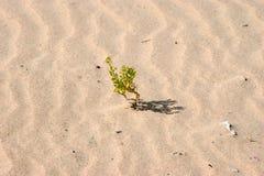Пляж Танжера Стоковые Фото