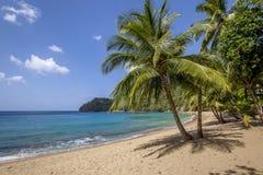 Пляж Тобаго стоковое фото