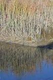Пляж травы болота растущий близко Стоковая Фотография RF